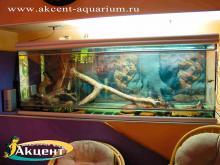 Акцент-аквариум. Террариум длиной два метра с анакондой