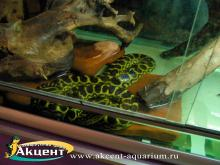 Акцент-аквариум.  Анаконда в террариуме