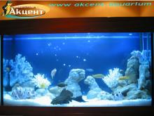 Акцент-аквариум, аквариум 200 псевдо-море, африканские цихлиды, сом птеригоплихт