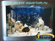Акцент-аквариум, аквариум 400л псевдо-море астронотус, африканские цихлиды