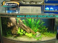 Акцент-аквариум, аквариум 600л живые растения, коряга неоны меченосцы