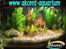 Акцент-аквариум, аквариум 350л живые растения