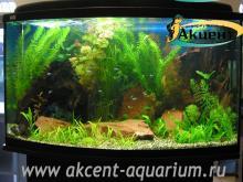 Акцент-аквариум, аквариум 170л, живые растения неоны