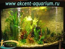 Акцент-аквариум, аквариум 700л живые растения неоны, данио и др.