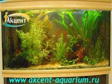 Акцент-аквариум, аквариум 400л живые растения неоны, гурами