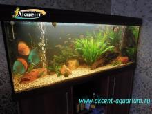 Акцент-аквариум, аквариум 400л, живые растения, дискусы