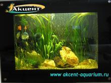 Акцент-аквариум, аквариум 500л живые растения, дискусы, гурами