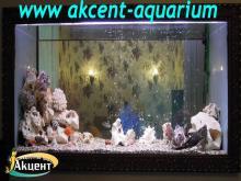 Акцент-аквариум, аквариум 400л псевдо-море астронотус, попугаи, африканские цихлиды