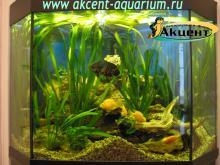 Акцент-аквариум, аквариум 300л живые растения астронотус, попугаи