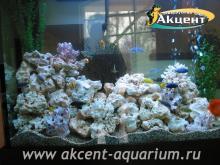 Акцент-аквариум, аквариум 500л псевдо-море, кенийский камень, африканские цихлиды, попугаи