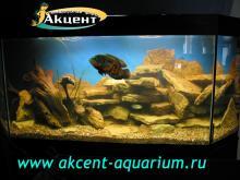 Акцент-аквариум, аквариум 400л астронотус
