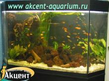 Акцент-аквариум, аквариум 400л живые растения, вулканическая лава африканские цихлиды