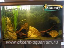 Акцент-аквариум, аквариум 250л паку