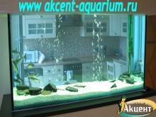 Акцент-аквариум, аквариум 980л сом пангасиус