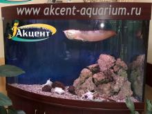 Акцент-аквариум, аквариум 700л арована