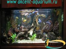 Акцент-аквариум, аквариум 500л вулканическая лава, африканские цихлиды