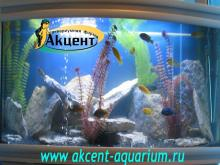 Акцент-аквариум, аквариум 280л африканские цихлиды