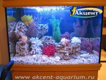 Акцент-аквариум, аквариум 200л псевдо-море африканские цихлиды