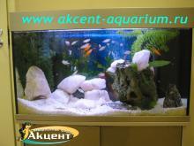 Акцент-аквариум, аквариум 250л кварц радужницы