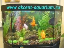 Акцент-аквариум, аквариум 200л попугаи