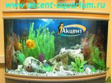 Акцент-аквариум, аквариум 400л попугаи