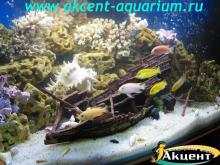 Акцент-аквариум, аквариум 800л псевдо-море, песчаник декор - корабль африканские цихлиды
