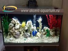 Акцент-аквариум, аквариум 250л псевдо-море, кенийский камень  африканские цихлиды