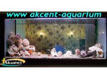 Акцент-аквариум, аквариум 700л псевдо-море попугаи африканские цихлиды, бирюзовая акара