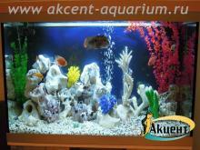 Акцент-аквариум, аквариум 350л псевдо-море африканские цихлиды бирюзовая акара, попугаи