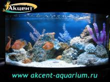 Акцент-аквариум, аквариум 300л псевдо-море, кенийский камень попугаи