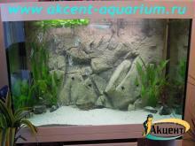 Акцент-аквариум, аквариум 450л псевдо-море скалярии, арована