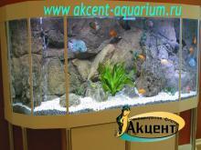 Акцент-аквариум, аквариум 980л псевдо-море африканские цихлиды  бриллиантовая цихлозома