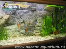 Акцент-аквариум, аквариум 400л задний фон пресноводный скат моторо, дискусы