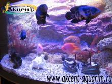 Акцент-аквариум, аквариум 450л псевдо- море, задний фон астронотусы, попугаи