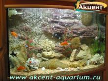 Акцент-аквариум, аквариум 350л псевдо-море внутренний фон золотые рыбки
