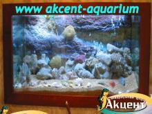 Акцент-аквариум, аквариум 350л псевдо-море внутренний фон попугай  бриллиантовая цихлозома