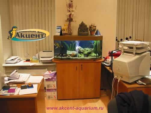 Акцент-аквариум,аквариум 170 литров панорамный,офис