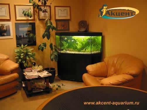 Акцент-аквариум,аквариум 300 литров угловой с живыми растениями