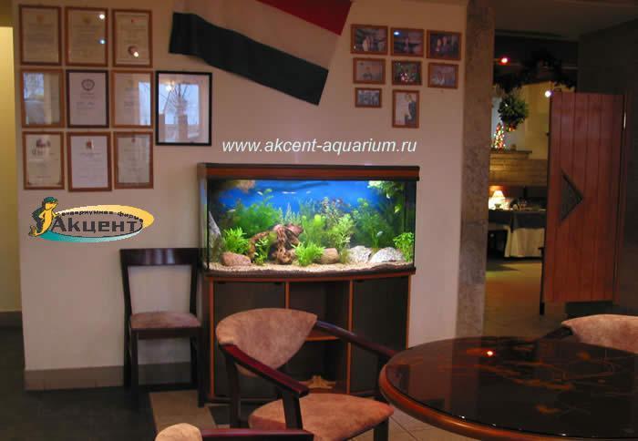 Акцент-аквариум,аквариум 270 литров с гнутым передним стеклом,кафе