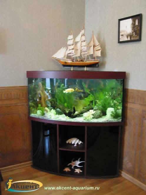 Акцент-аквариум,аквариум 2040 литров угловой с гнутым передним стеклом.