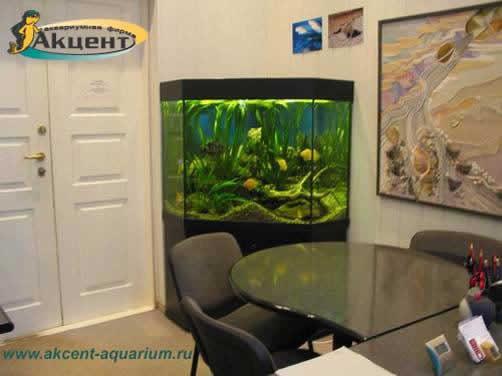 Акцент-аквариум,аквариум 500 литров угловой