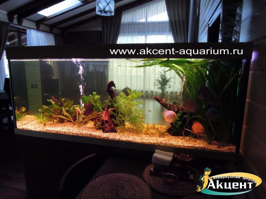 Акцент-аквариум, аквариум просмотровый 600 литров, с живыми растениями
