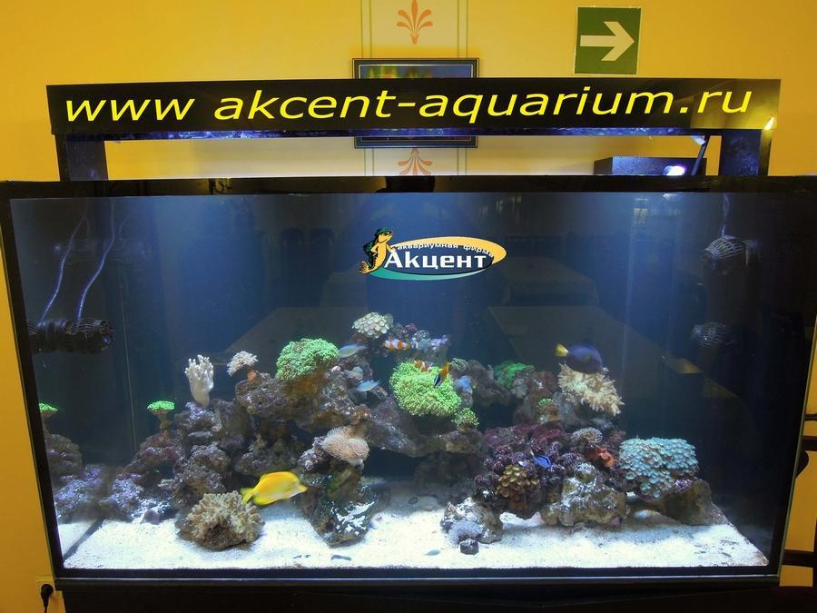 Акцент-аквариум морской рифовый аквариум 800 литров