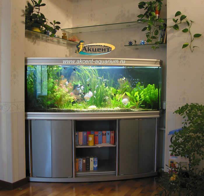 Акцент-Аквариум, живые растения, дискусы, скалярии
