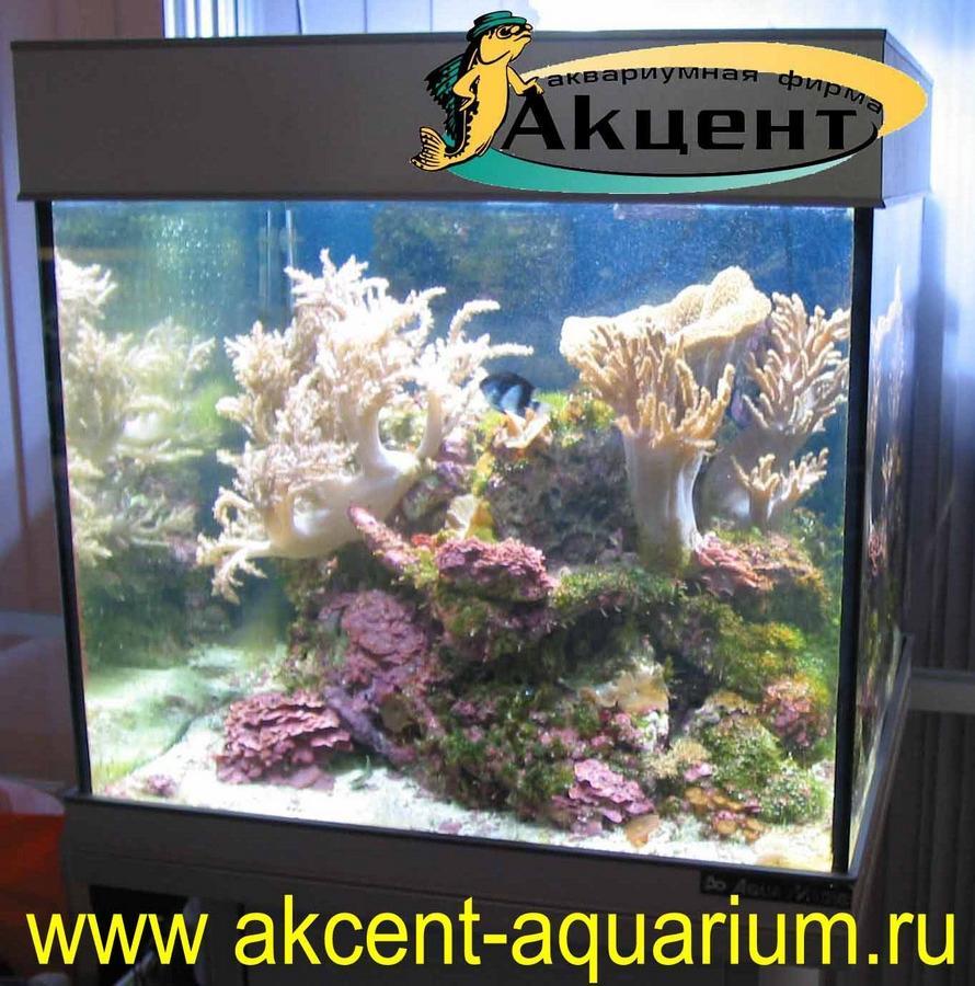 Акцент-аквариум, морской аквариум 100 литров, живые камни, мягкие кораллы