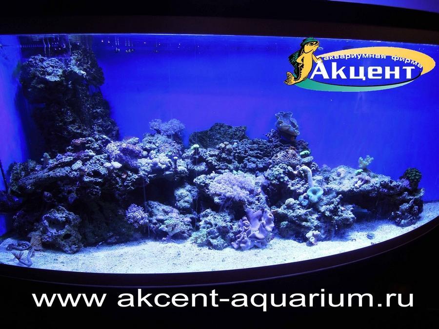 Акцент-аквариум, угловой морской аквариум с гнутым стеклом 800 литров, живые камни, мягкие кораллы, жесткие кораллы