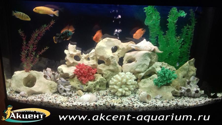 Акцент-аквариум, аквариум 240 литров, псевдоморе, кенийский камень,африканские цихлиды, бирюзовые акары, попугаи