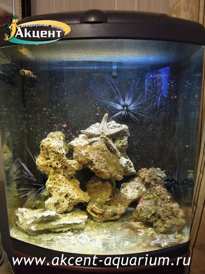 Акцент-аквариум, аквариум 130 литров, море, морские ежи, морские звезды.