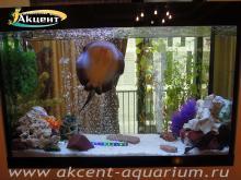 Акцент-аквариум пресноводный аквариум 600 л. скат моторо