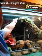 Акцент-аквариум. Кормление игуаны